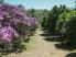 Одесский ботанический сад