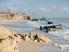 Дикие пляжи Одессы